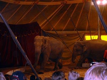 Cirkus Mustang 2004- ett svek mot bådedjur och människor!