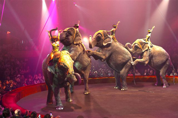 cirkus arena land
