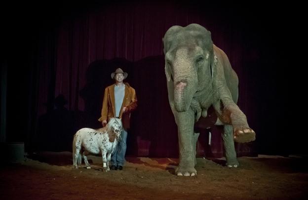 charlie weber elefant