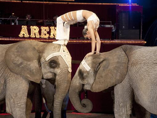 Elefantmamma satte zoo rekord