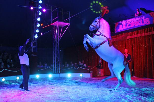 cirkus summarum 2014
