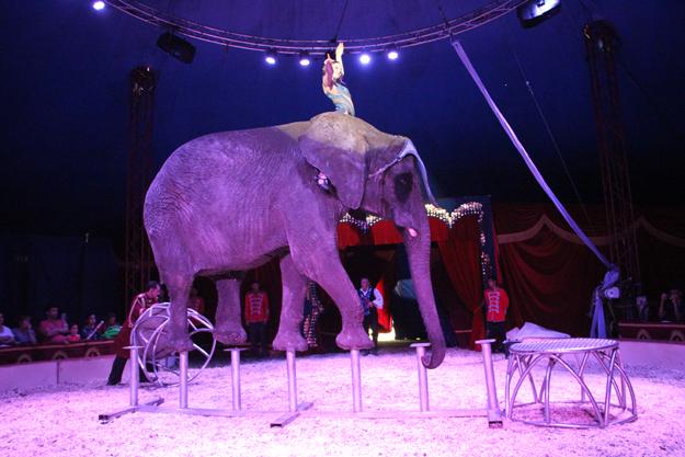latein circus continuus cd zum